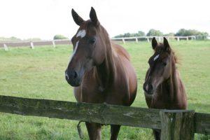 Pferde OP Versicherung